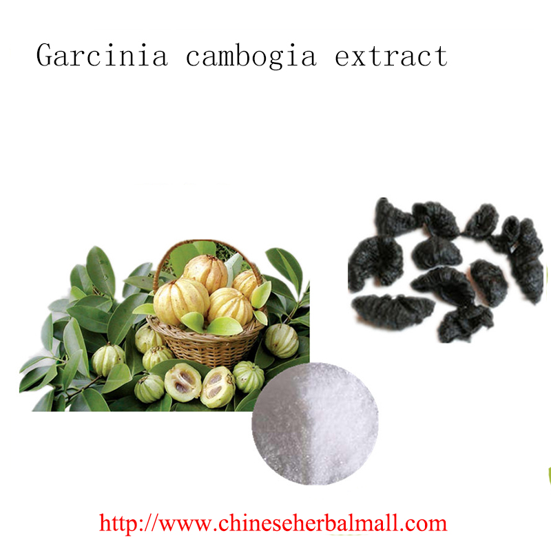 100g high quality natural Weight control powder Cactus Extract 10:1 for Weight Loss