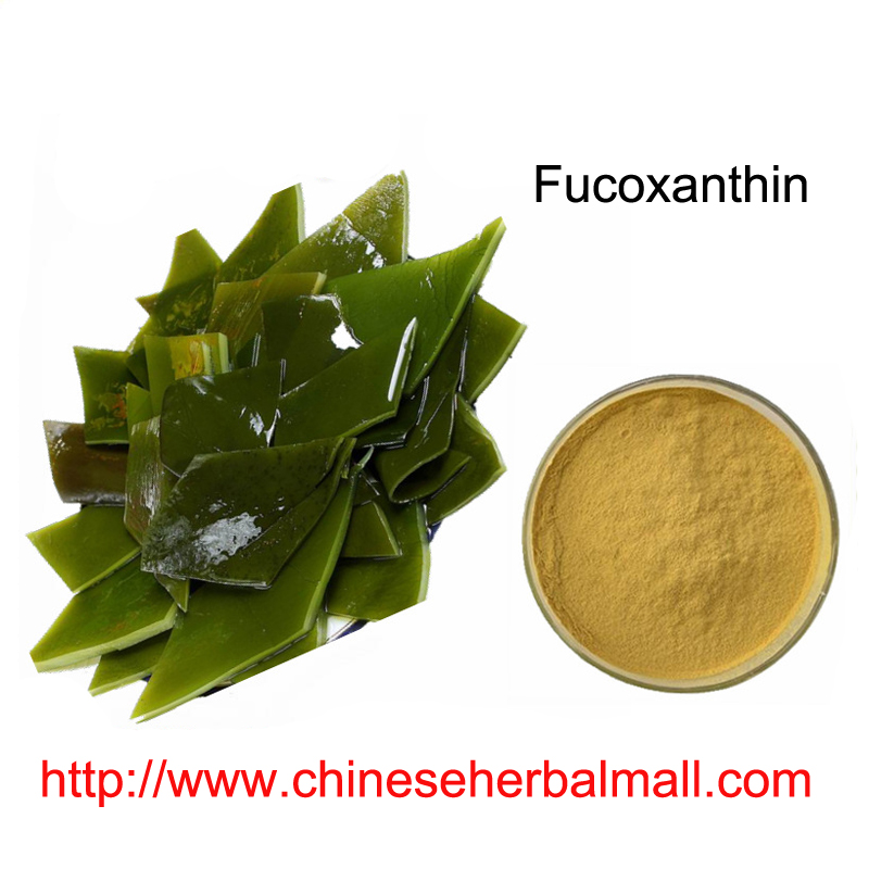 100g natural Seaweed Extract Fucoxanthin Kelp Extract Powder 10:1 for weight loss Free shipping