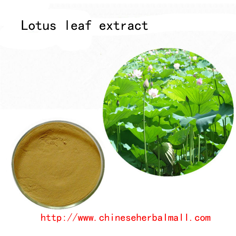 100g Top quality Lotus Leaf extract (Herb extract) 10:1 Lotus Leaf Flavonoids, weight control herbs