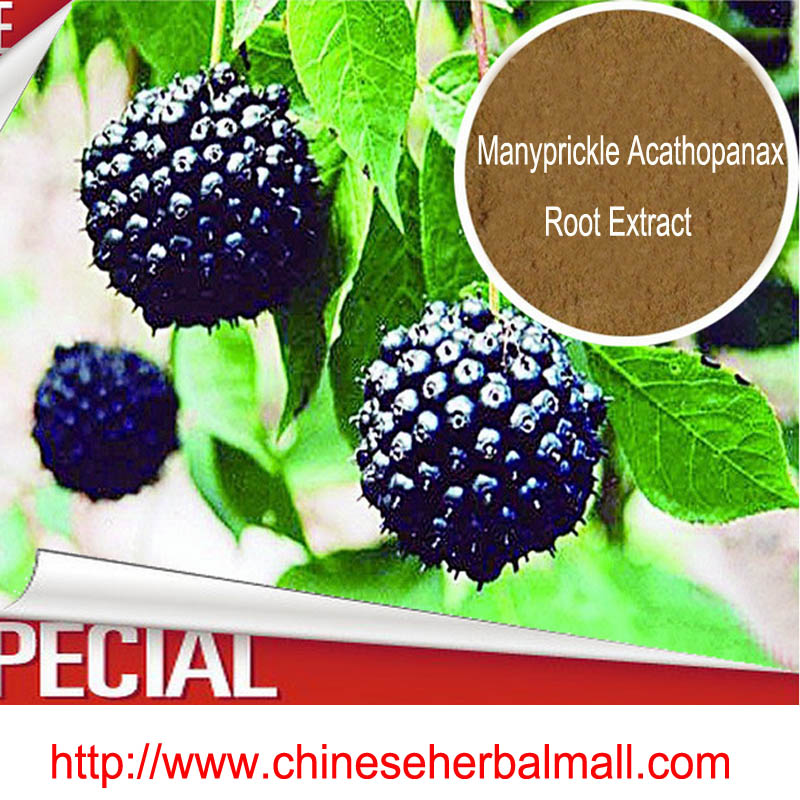 100g /bag 100% Pure Manyprickle Acathopanax Root Extract Powder B+E 0.8%